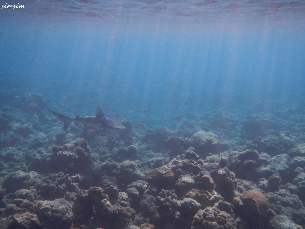 父島KANAMEビーチサメ