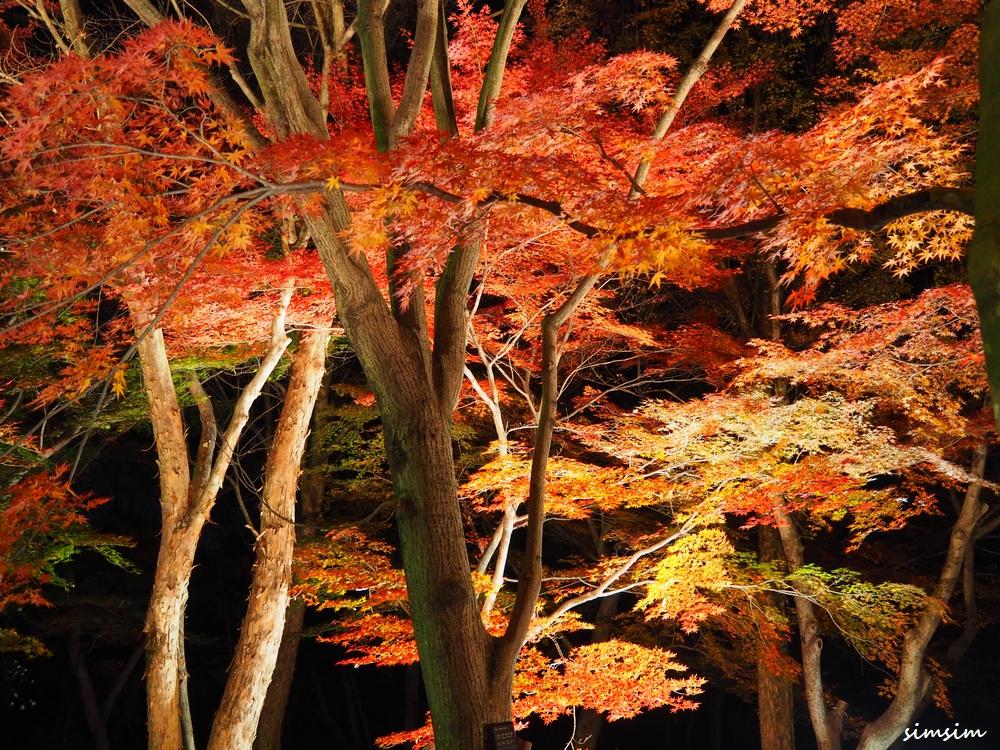 森林公園紅葉見ナイト