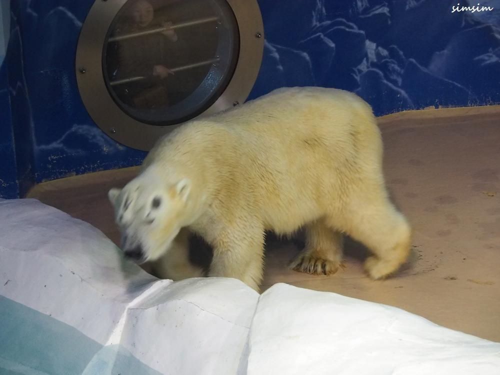 アドベンチャーワールド白熊