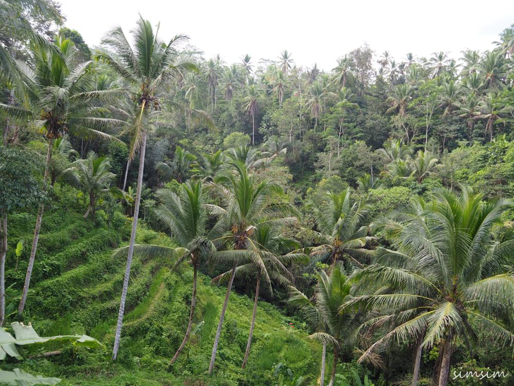 バリ島 ウマパケル