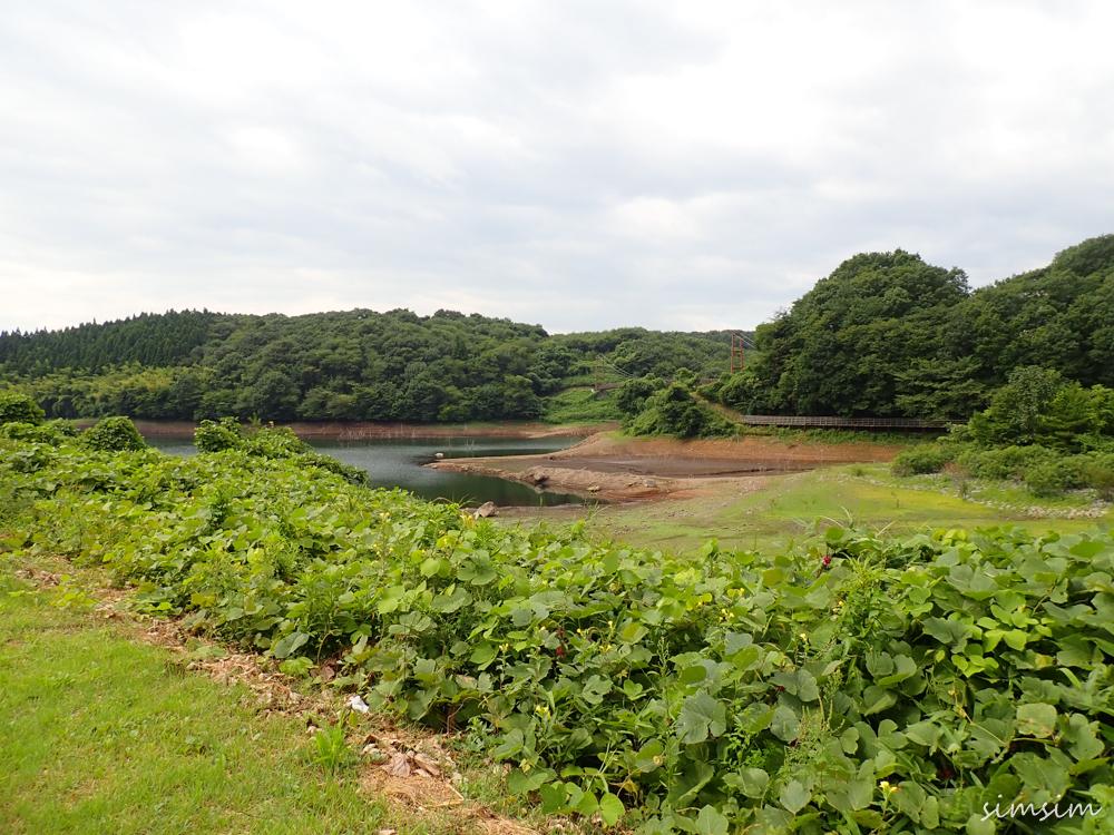 矢の目ダム湖