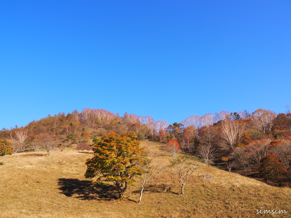 大菩薩嶺登山