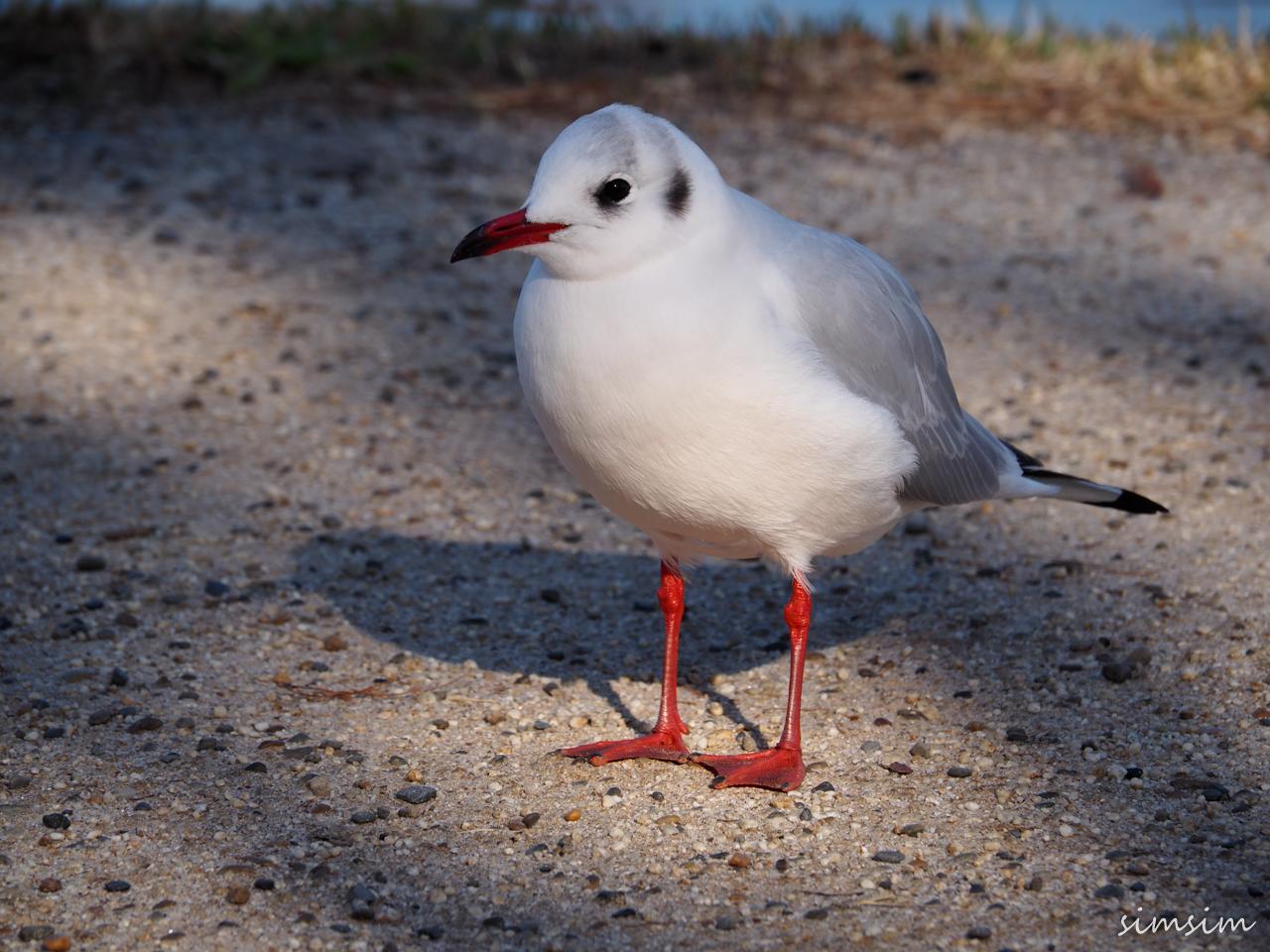 水元公園水鳥