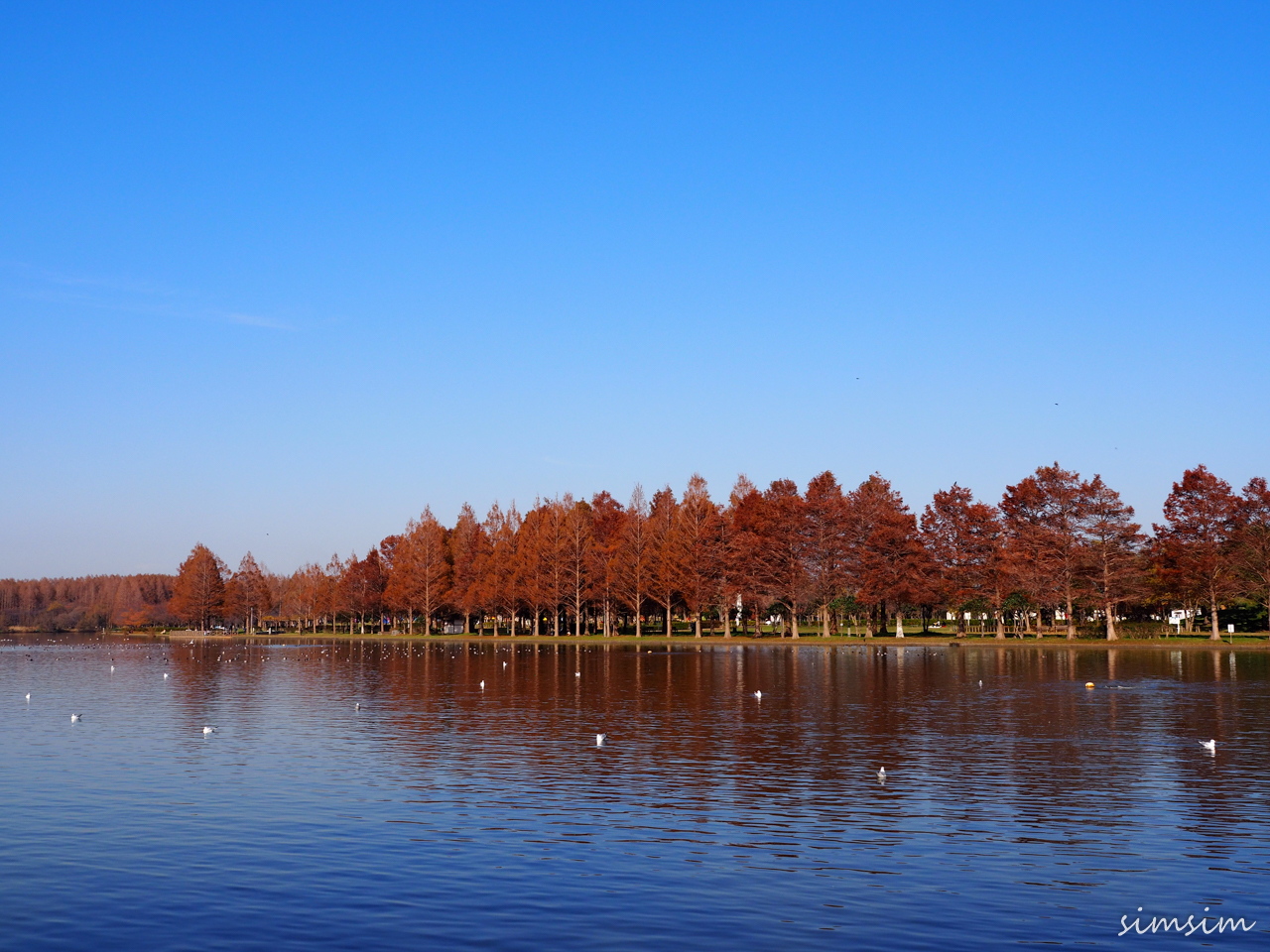 水元公園紅葉