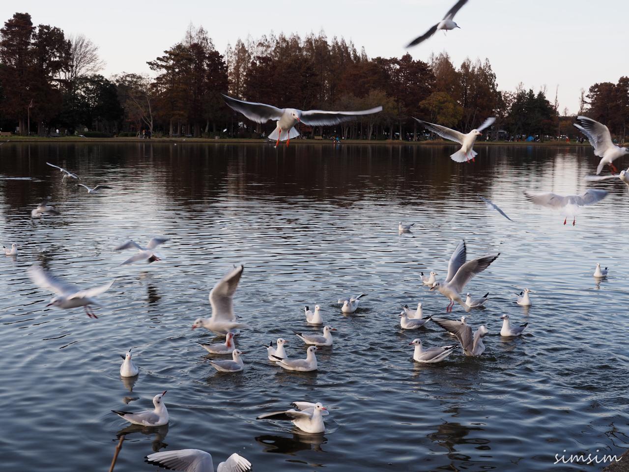みさと公園水鳥
