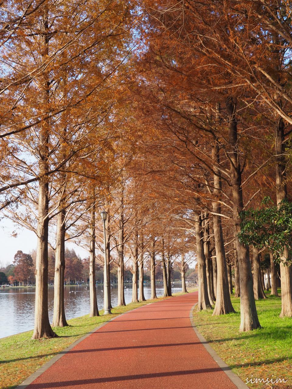 みさと公園紅葉