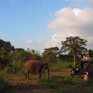 スリランカ旅行ジープサファリ
