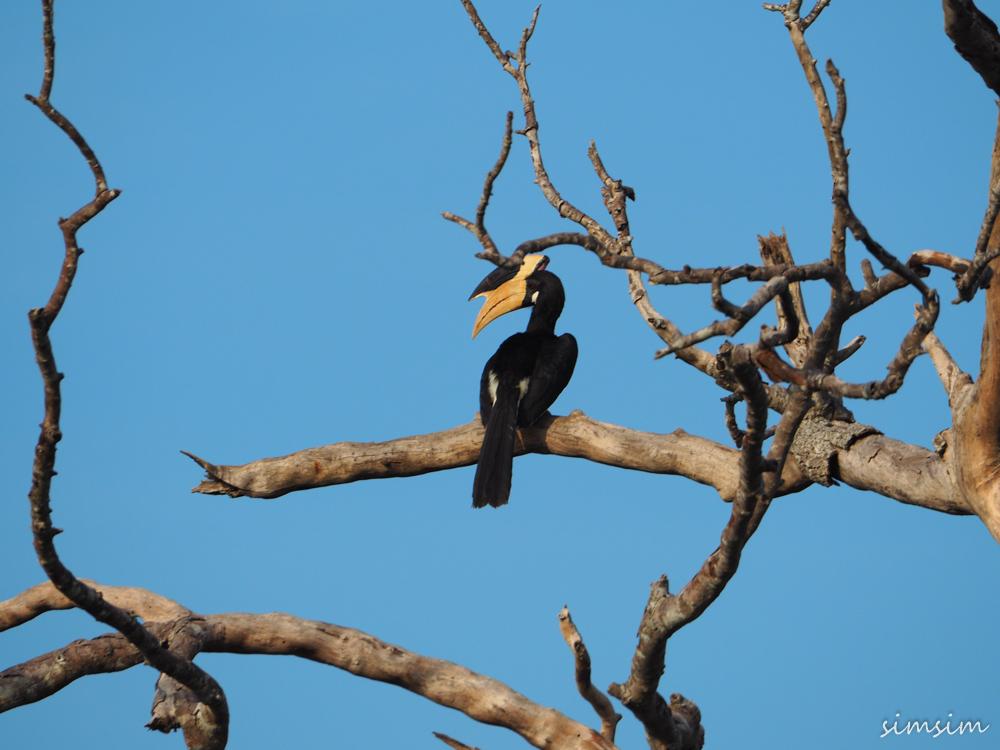 スリランカ旅行ヤーラ国立公園