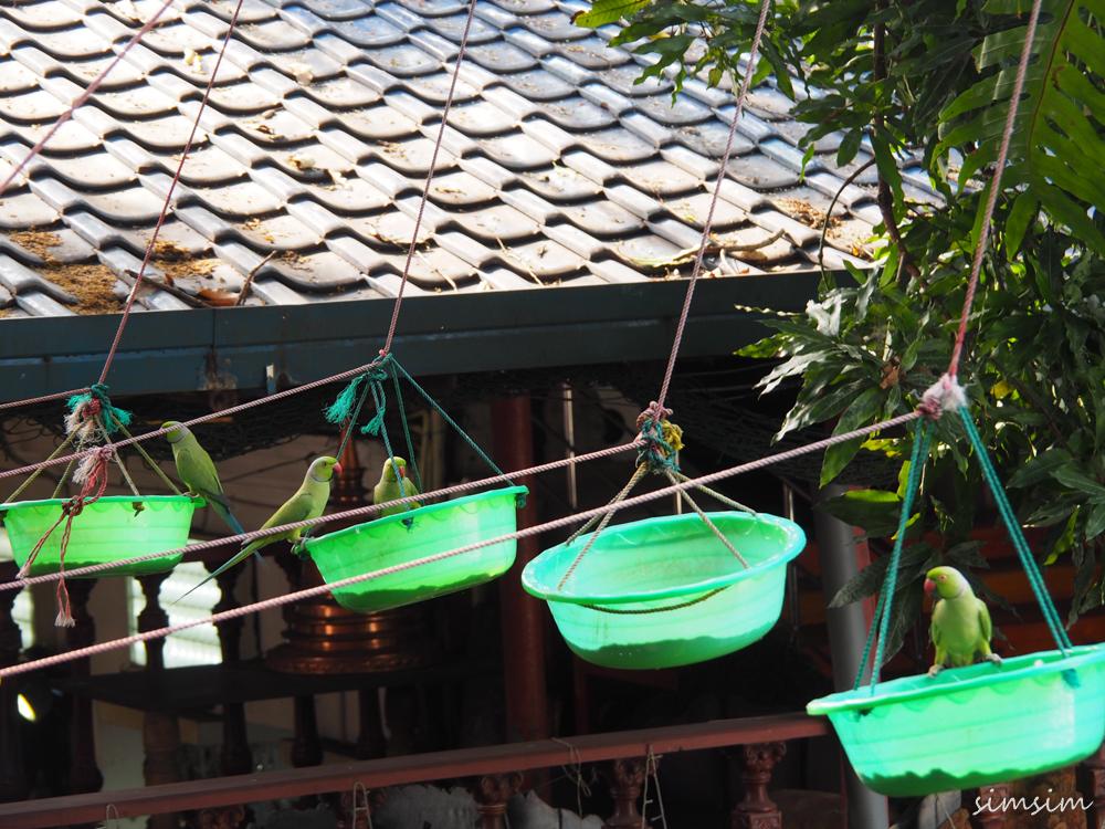 スリランカ旅行ガンガラーマ寺院