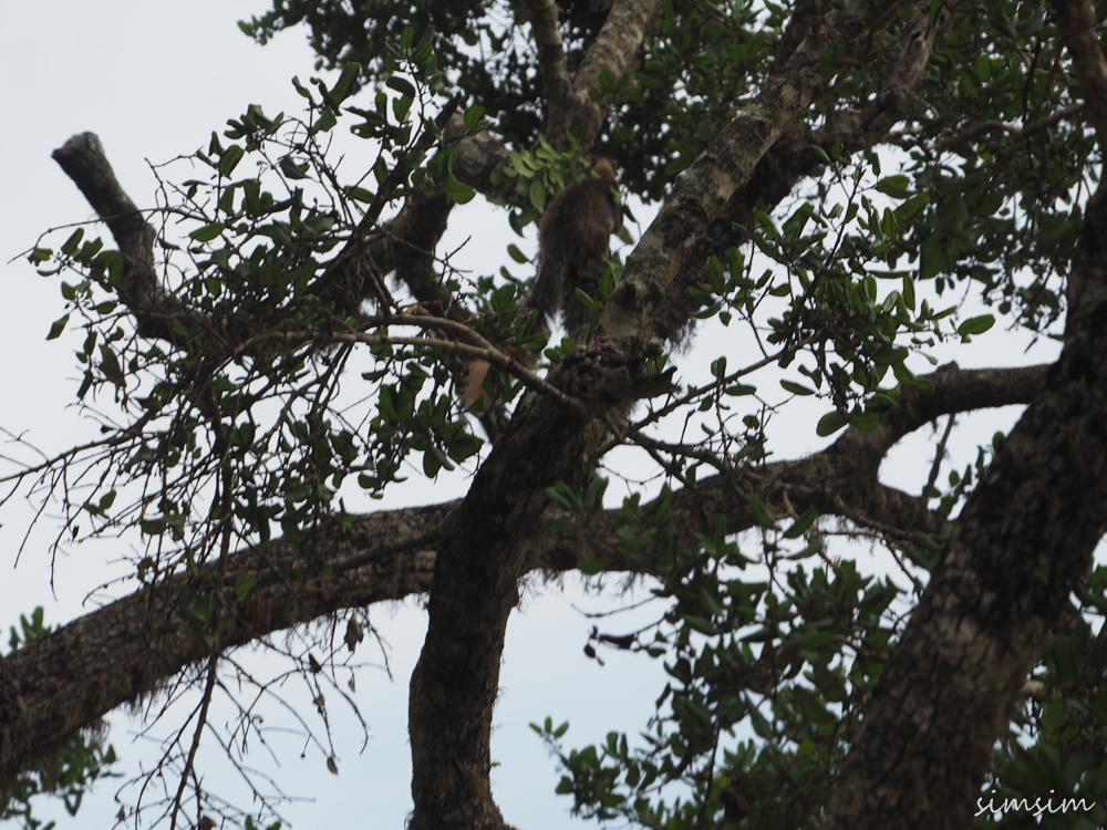 スリランカヤーラ国立公園