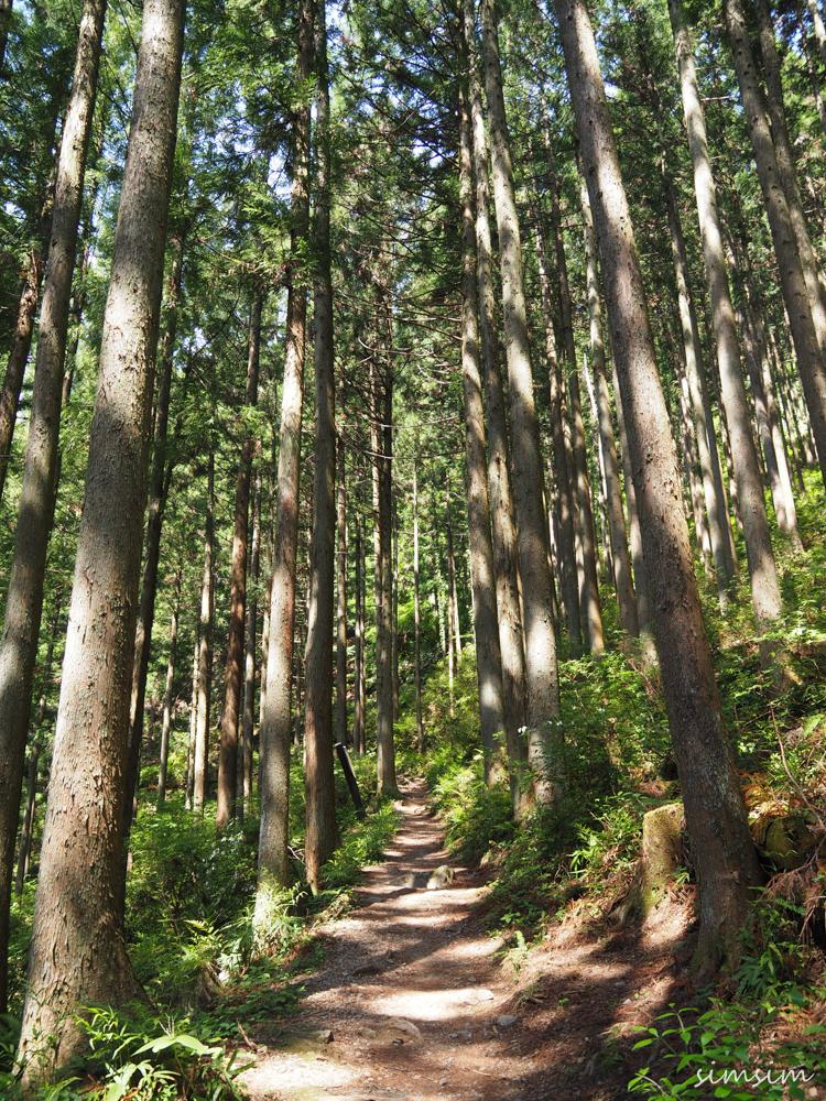 棒ノ折山ハイキング