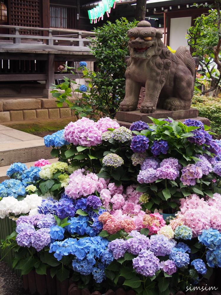 東京紫陽花名所