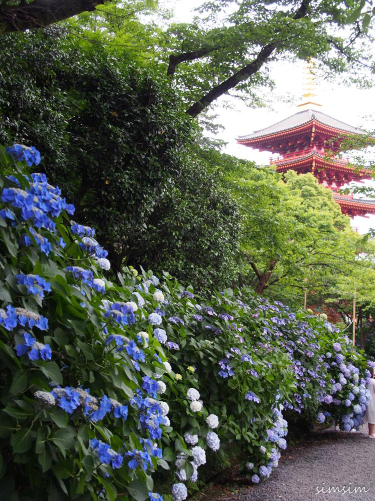 東京紫陽花