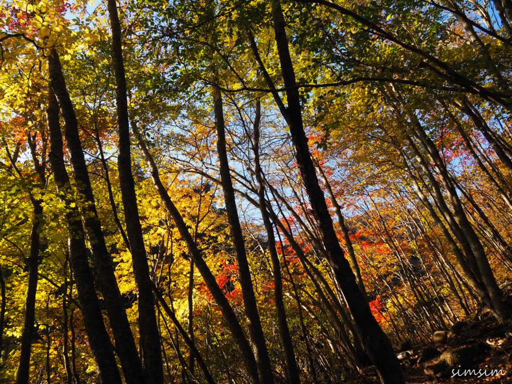 西沢渓谷紅葉ハイキング