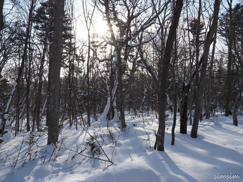 野幌森林公園