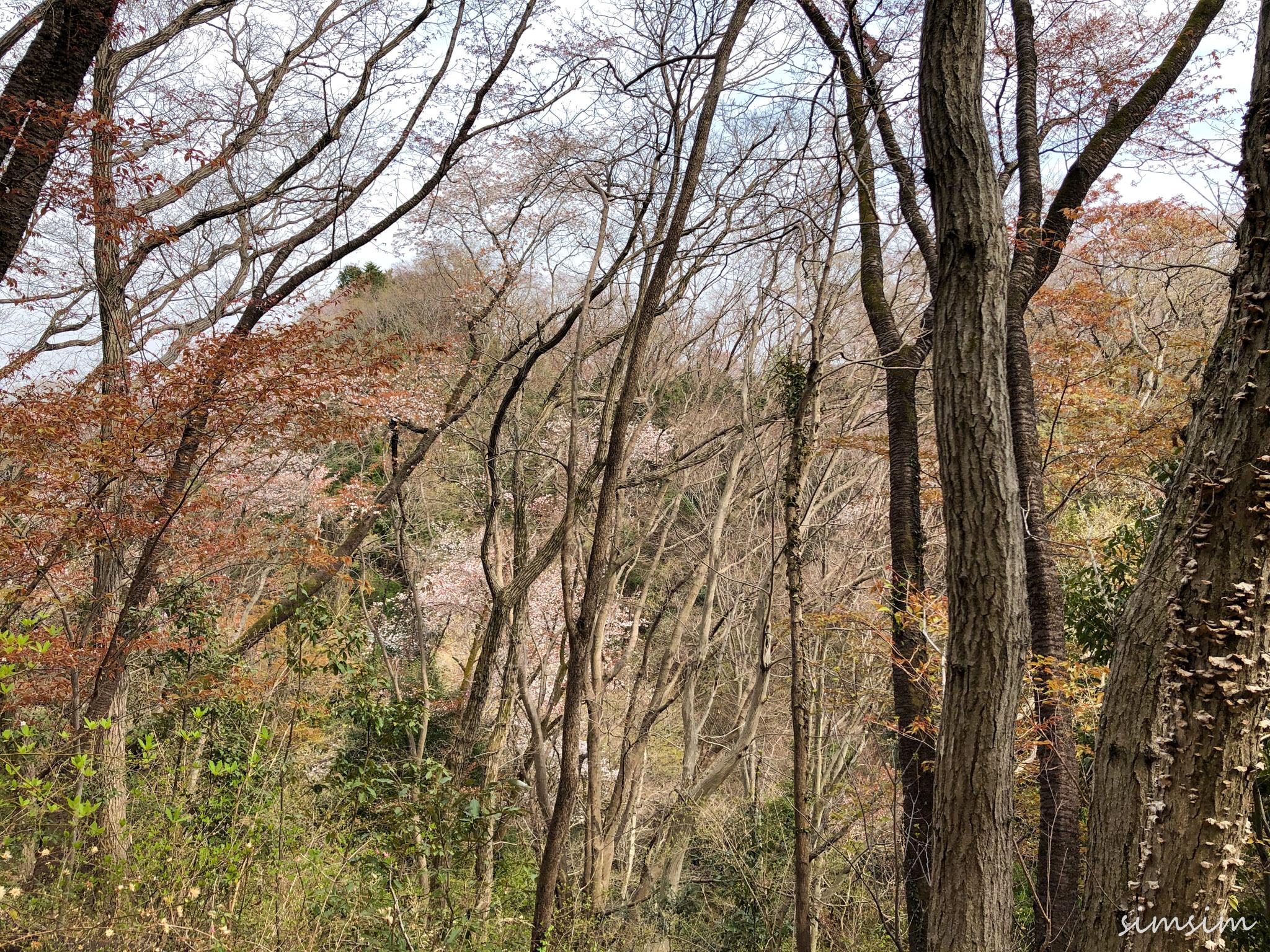 かたくりの里~草戸山ハイキング